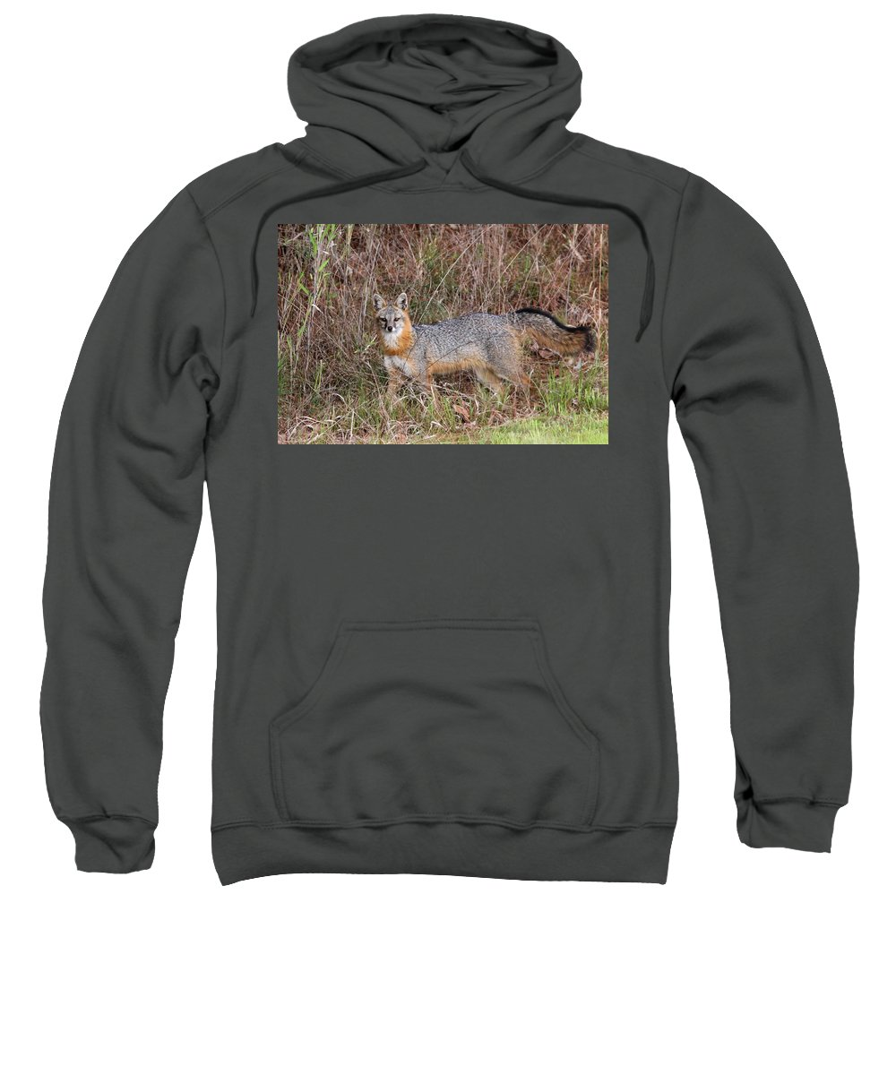Grey Fox Sweatshirt featuring the photograph On The Prowl by Travis Truelove