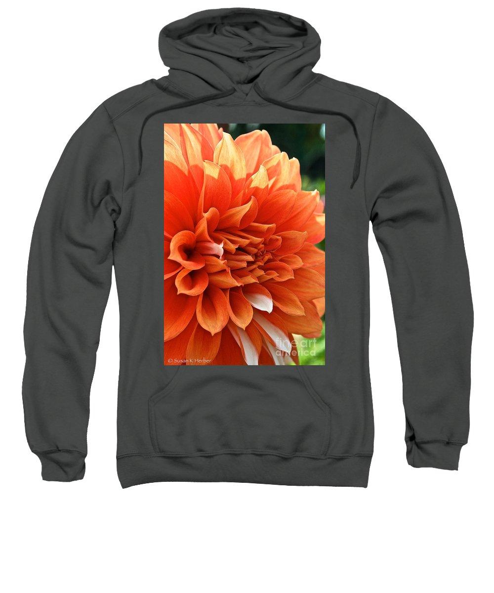 Outdoors Sweatshirt featuring the photograph Orange Vanilla Dahlia by Susan Herber