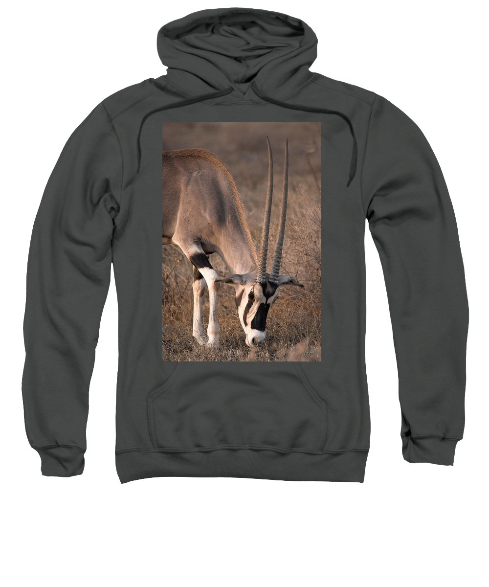 Animal Sweatshirt featuring the photograph Oryx Oryx Beisa, Samburu National by Chris Upton