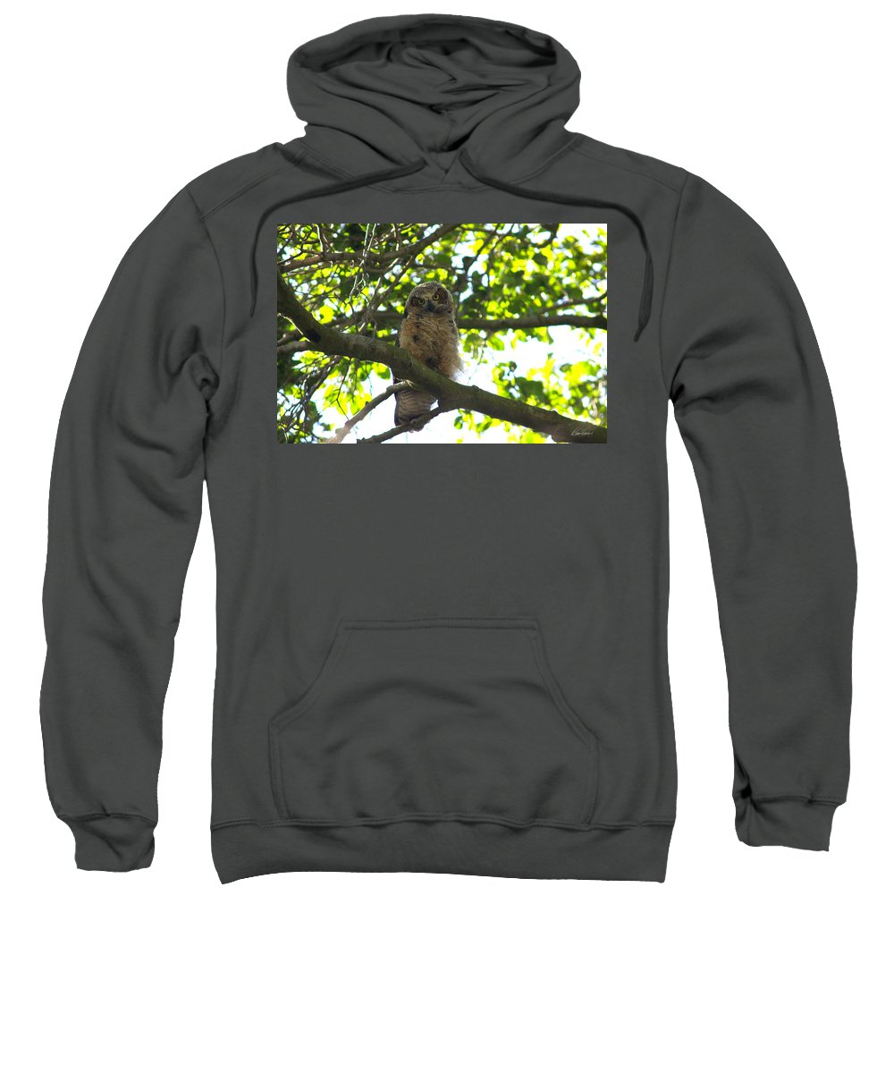 Owl Sweatshirt featuring the photograph Owl In Central Park by Diana Haronis