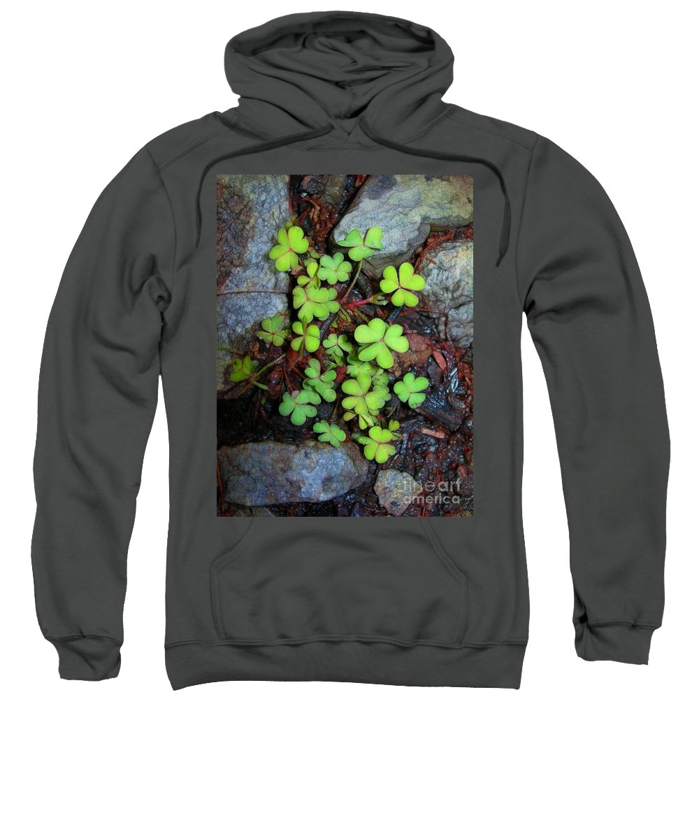 Oxalis Sweatshirt featuring the photograph Oxalis by Judi Bagwell