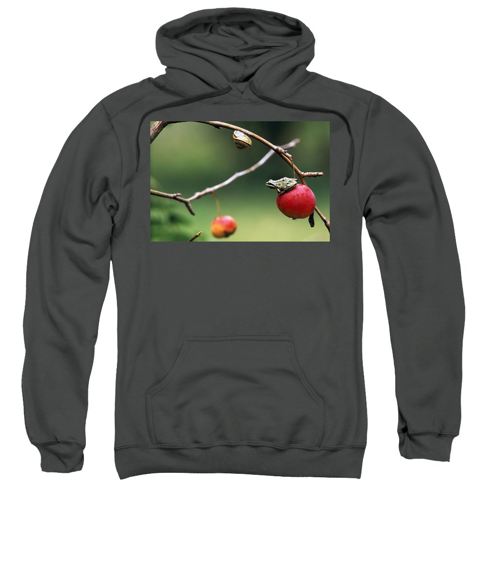 Color Images Sweatshirt featuring the photograph Pacific Tree Frog On A Crab Apple by David Nunuk