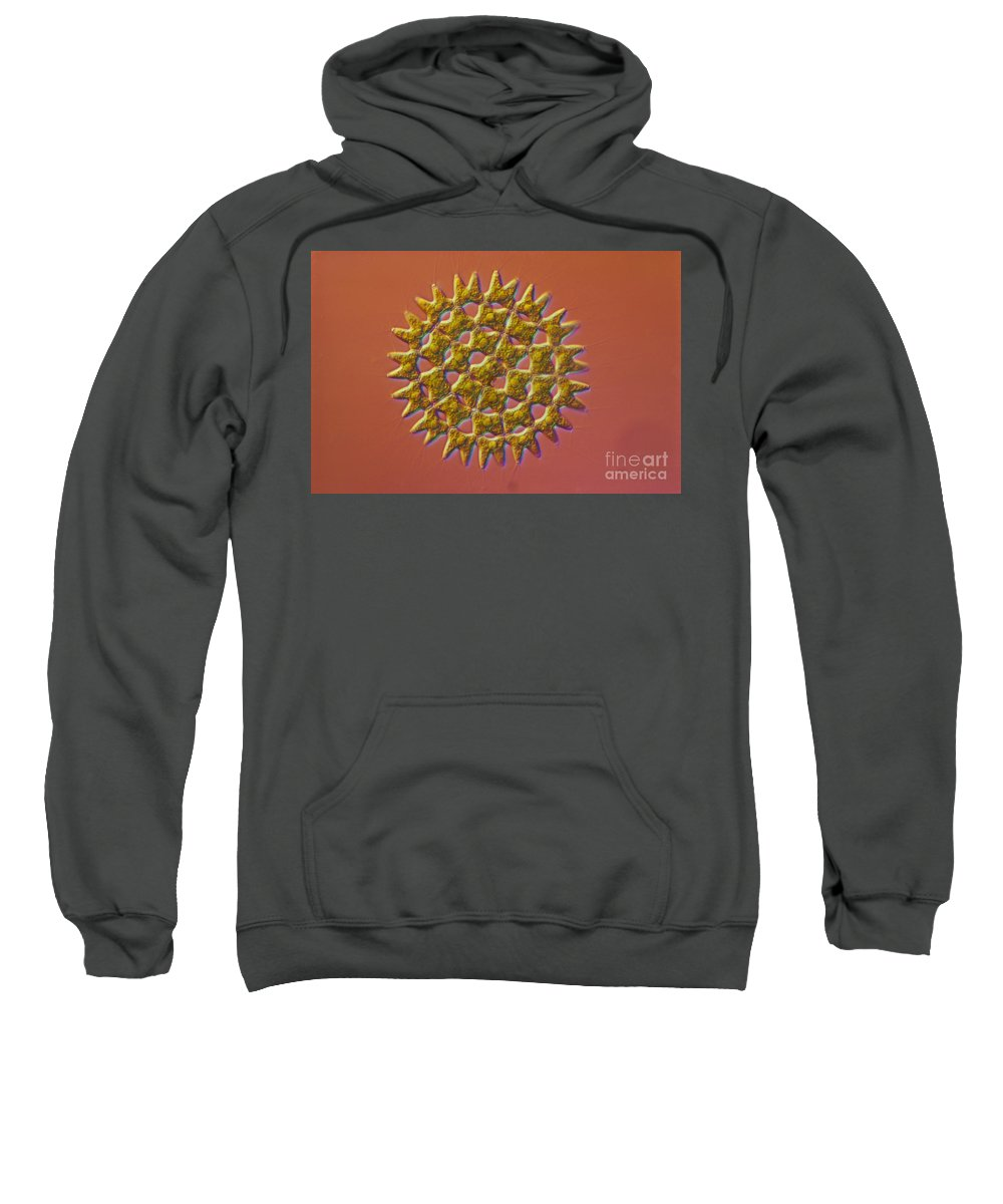 Science Sweatshirt featuring the photograph Pediastrum Sp. Algae, Lm by M. I. Walker