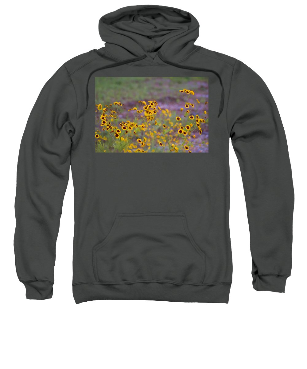 Coreopsis Tinctoria Sweatshirt featuring the photograph Perky Golden Coreopsis Wildflowers by Kathy Clark