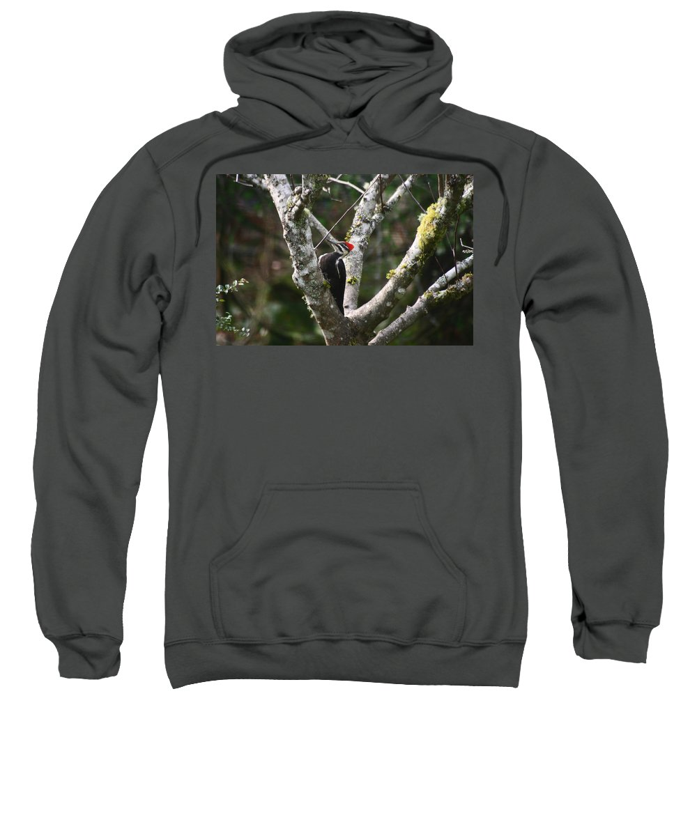 Pileated Woodpecker Sweatshirt featuring the photograph Pileated Woodpecker In Cherry Tree by Kym Backland