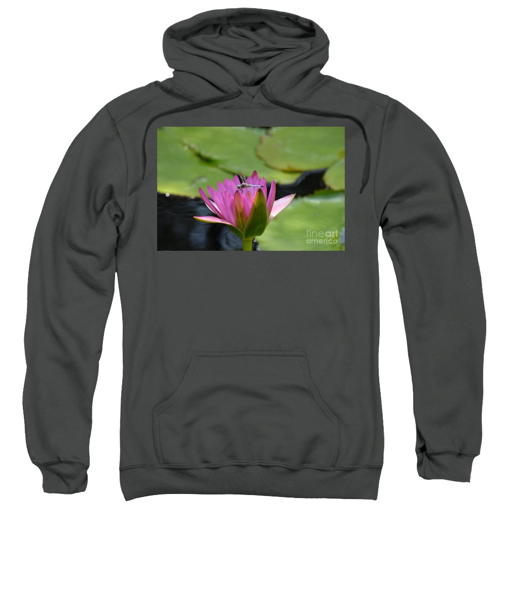 Pink Sweatshirt featuring the photograph Pink Beaded Wings by Maria Urso