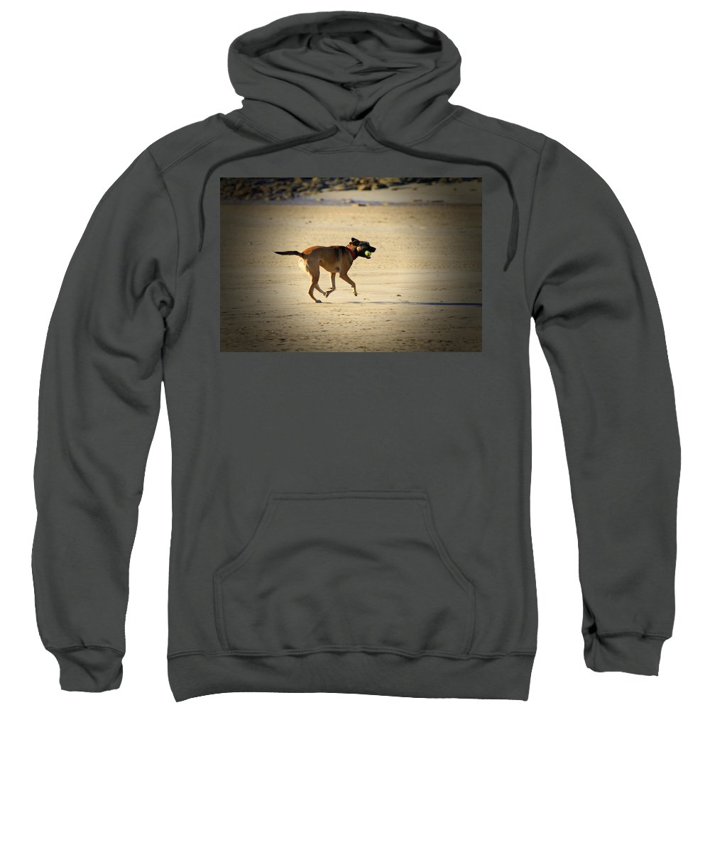 Dog Sweatshirt featuring the photograph Playing Ball On The Beach by Douglas Barnard