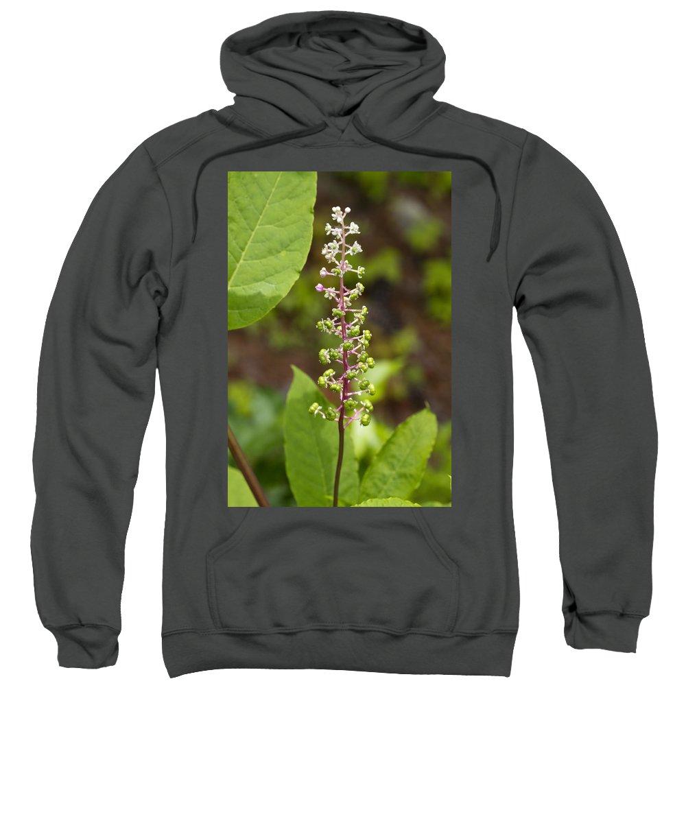 Phytolacca Acinosa Sweatshirt featuring the photograph Poke Sallet Blossom Spire - Phytolacca Acinosa by Kathy Clark