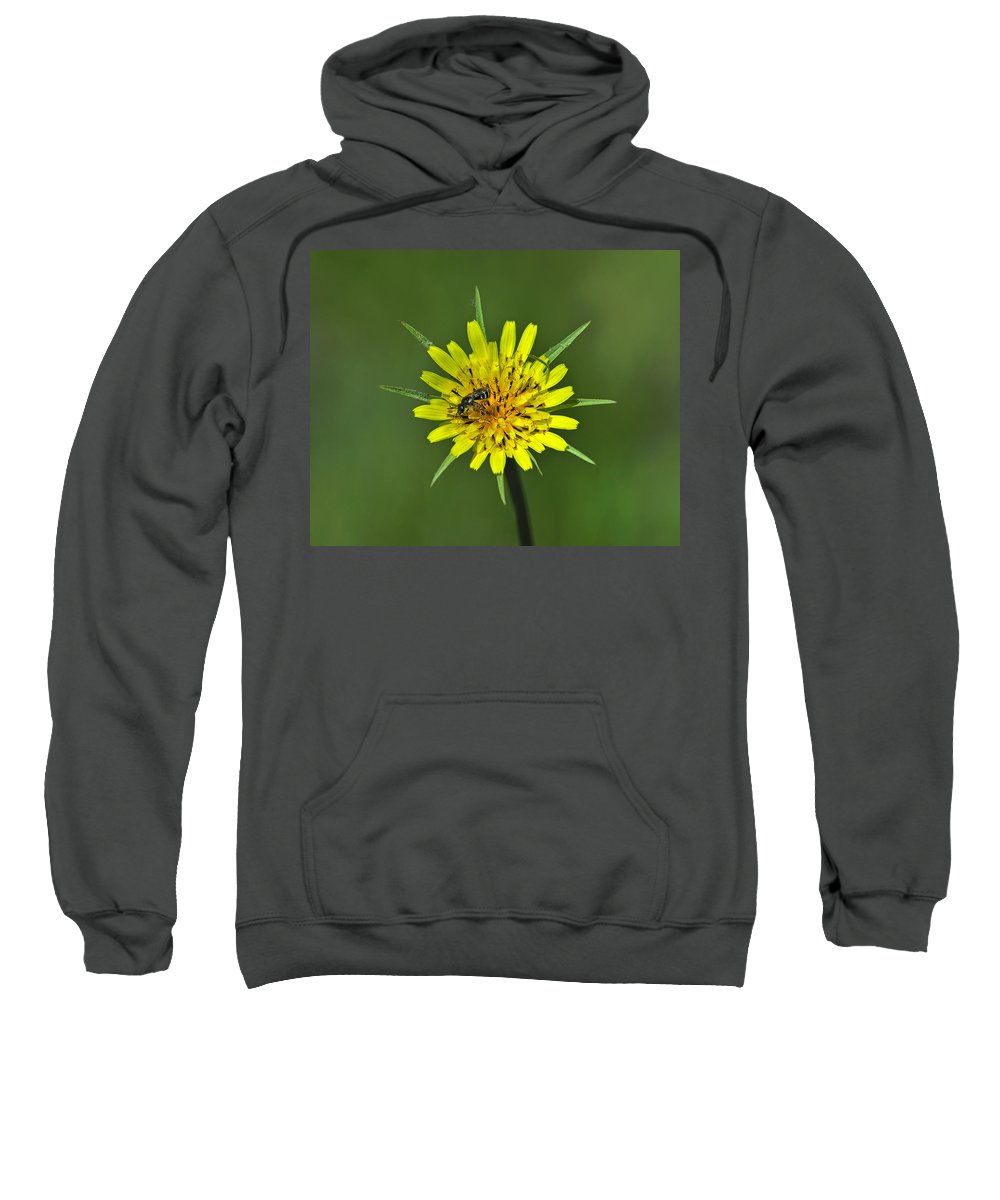 Meadow Salsify Sweatshirt featuring the photograph Pollination by Tony Beck