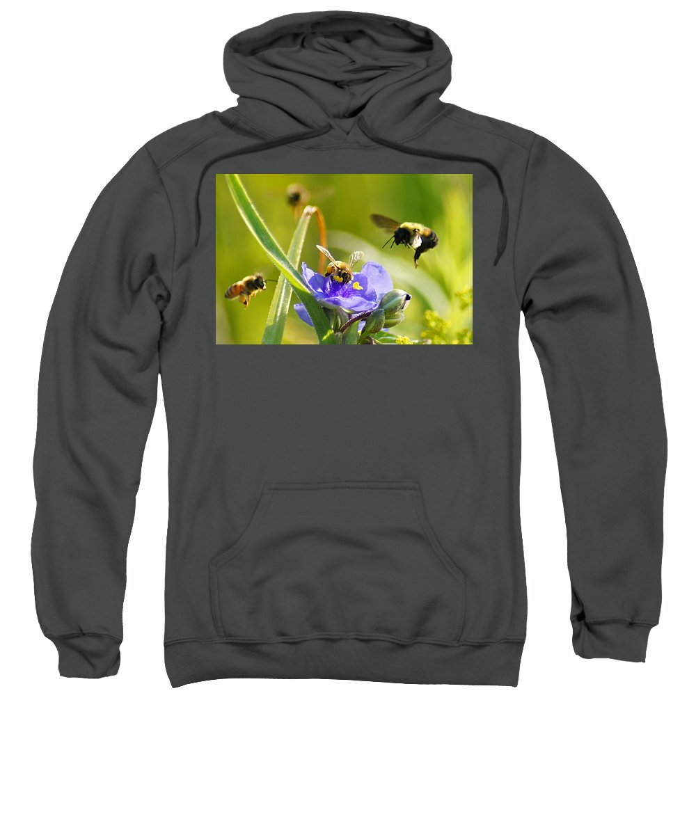 Bee Sweatshirt featuring the photograph Popular Spot Cropped by Bill Pevlor