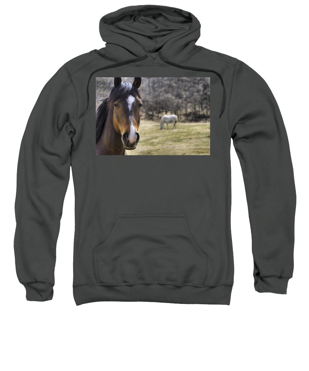Alberta Sweatshirt featuring the photograph Portrait Of A Horse by Philippe Widling
