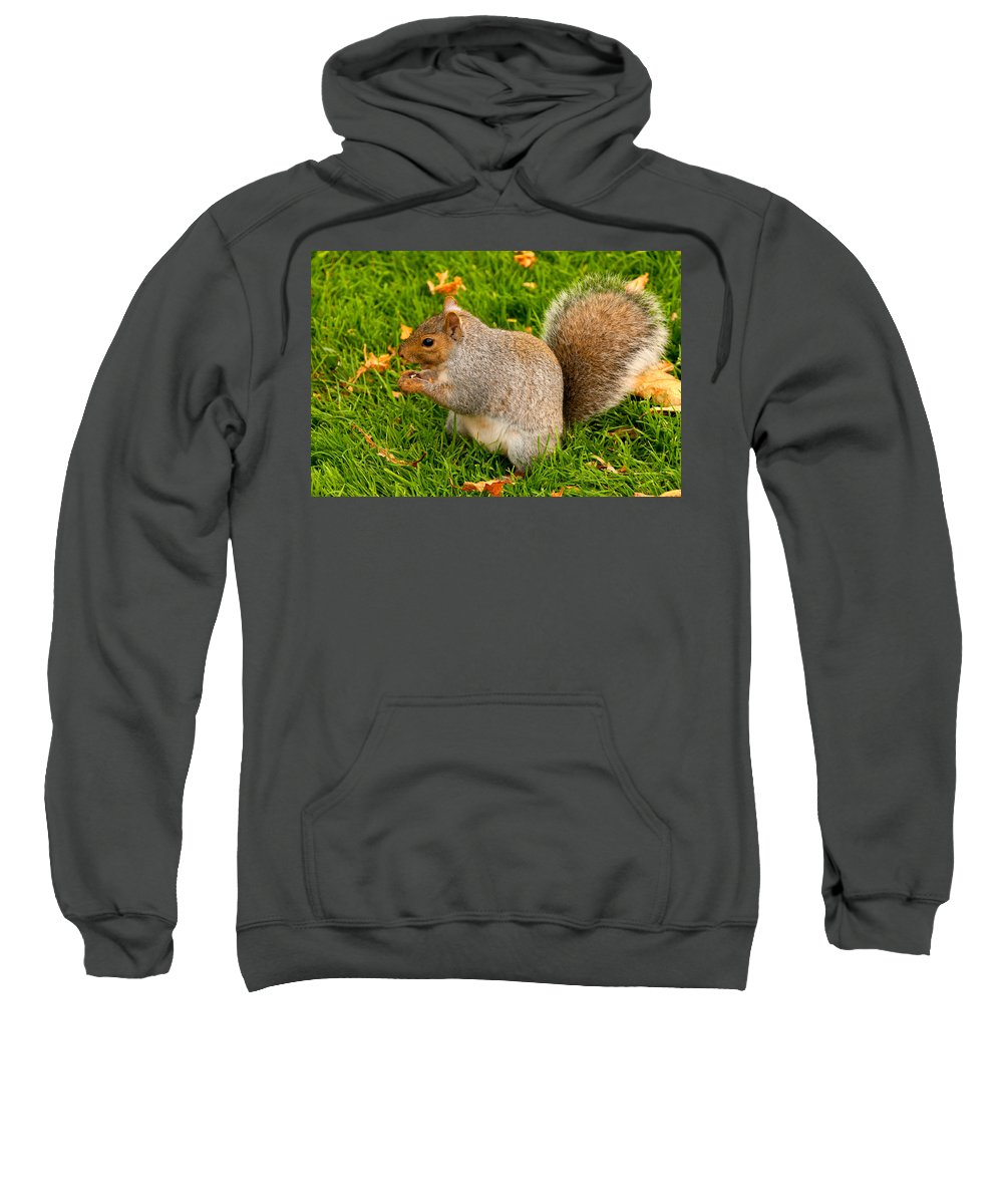 Squirrel Sweatshirt featuring the photograph Preparing For Winter by Paul Mangold