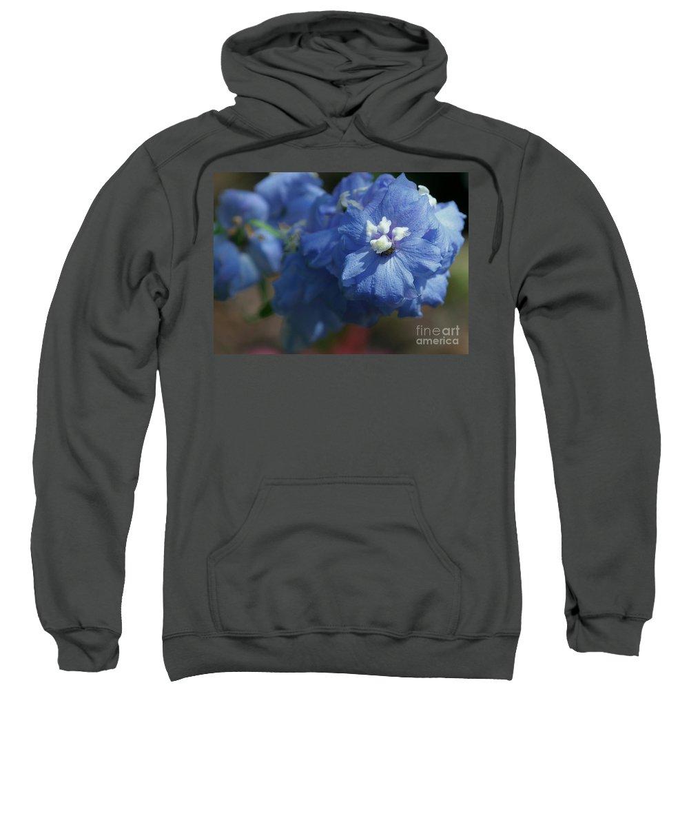 Blue Sweatshirt featuring the photograph Pretty Blue Delphinia by Sabrina L Ryan