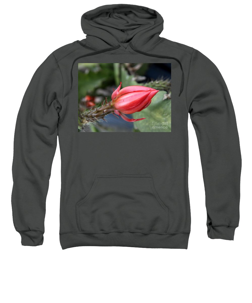 Bud Sweatshirt featuring the photograph Prickly Bud by Christiane Schulze Art And Photography
