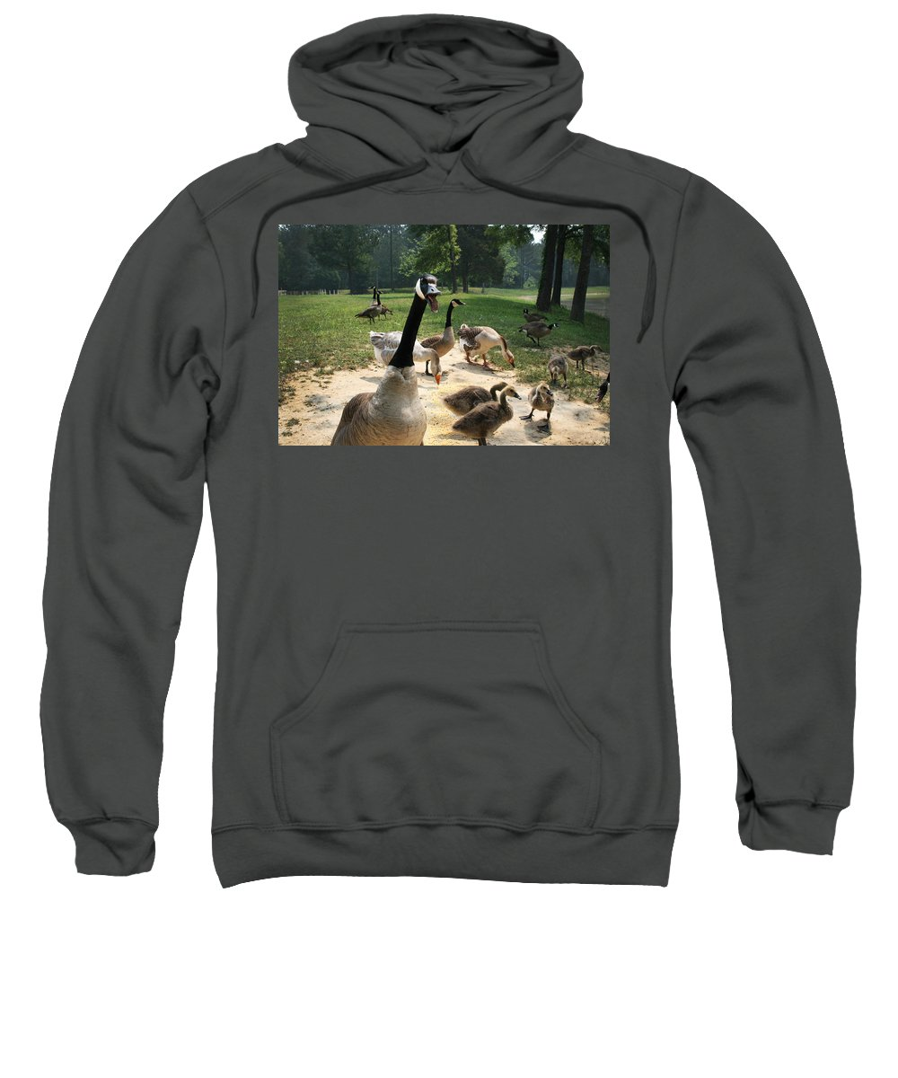 Canadian Sweatshirt featuring the photograph Protective Mad Mama Canadian Goose by Kathy Clark