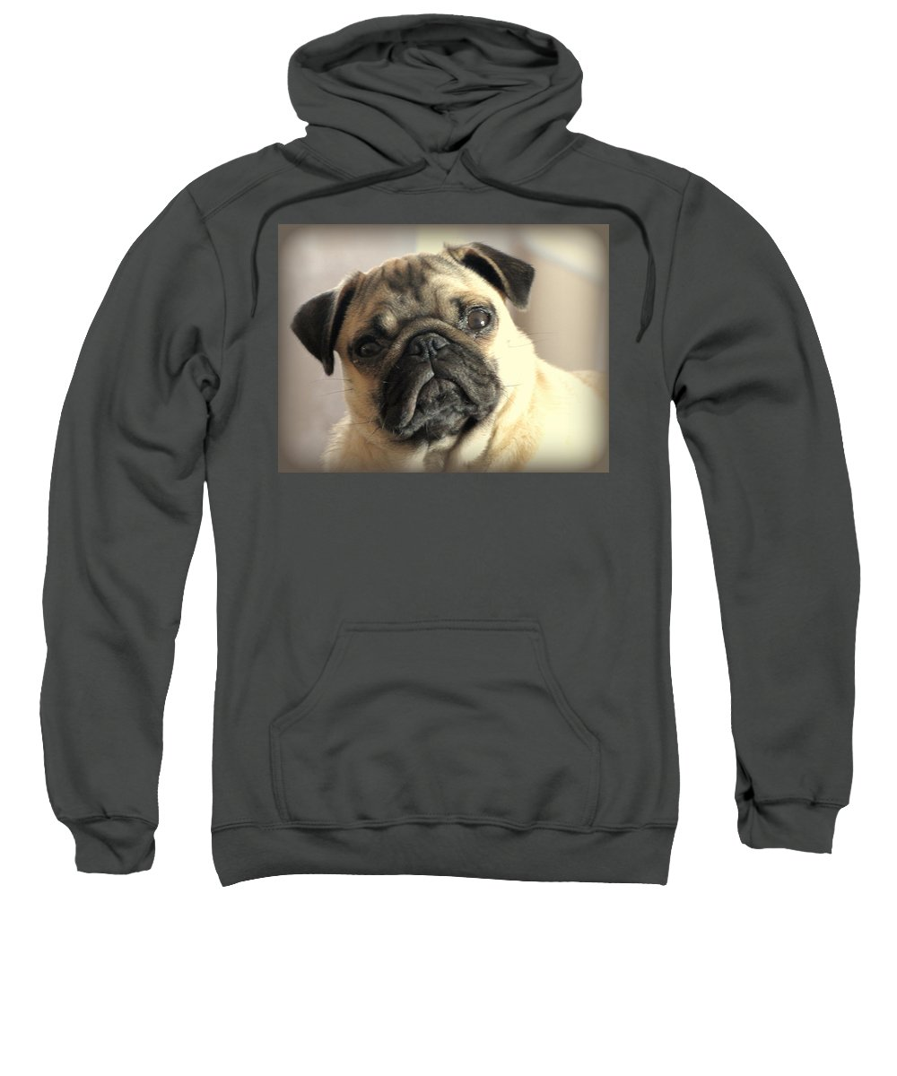 Chinese Pug Sweatshirt featuring the photograph Pug Love by Judy Garrett