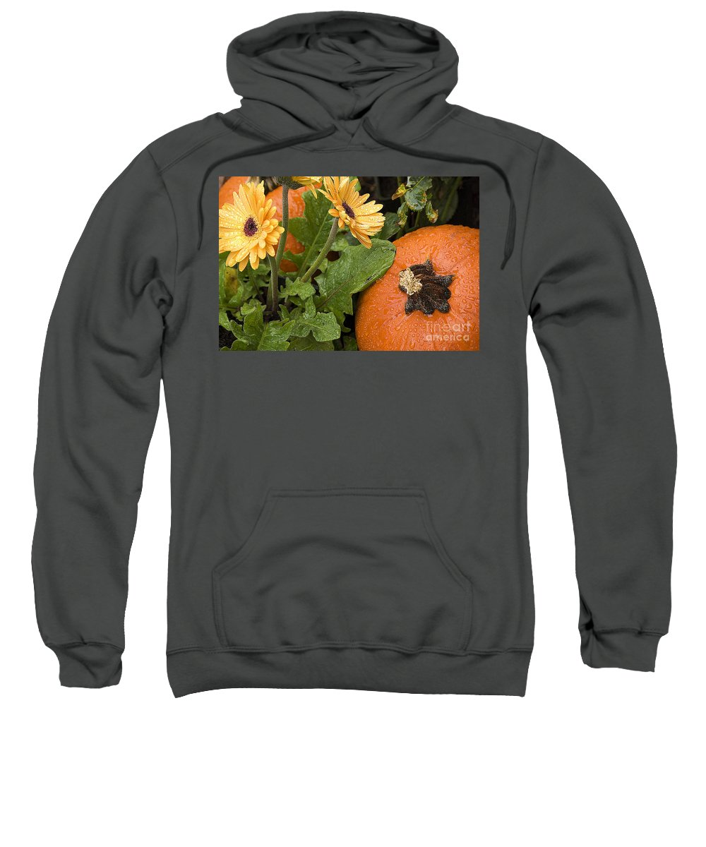 Fall Sweatshirt featuring the photograph Pumpkin And Gerberas by Jim And Emily Bush