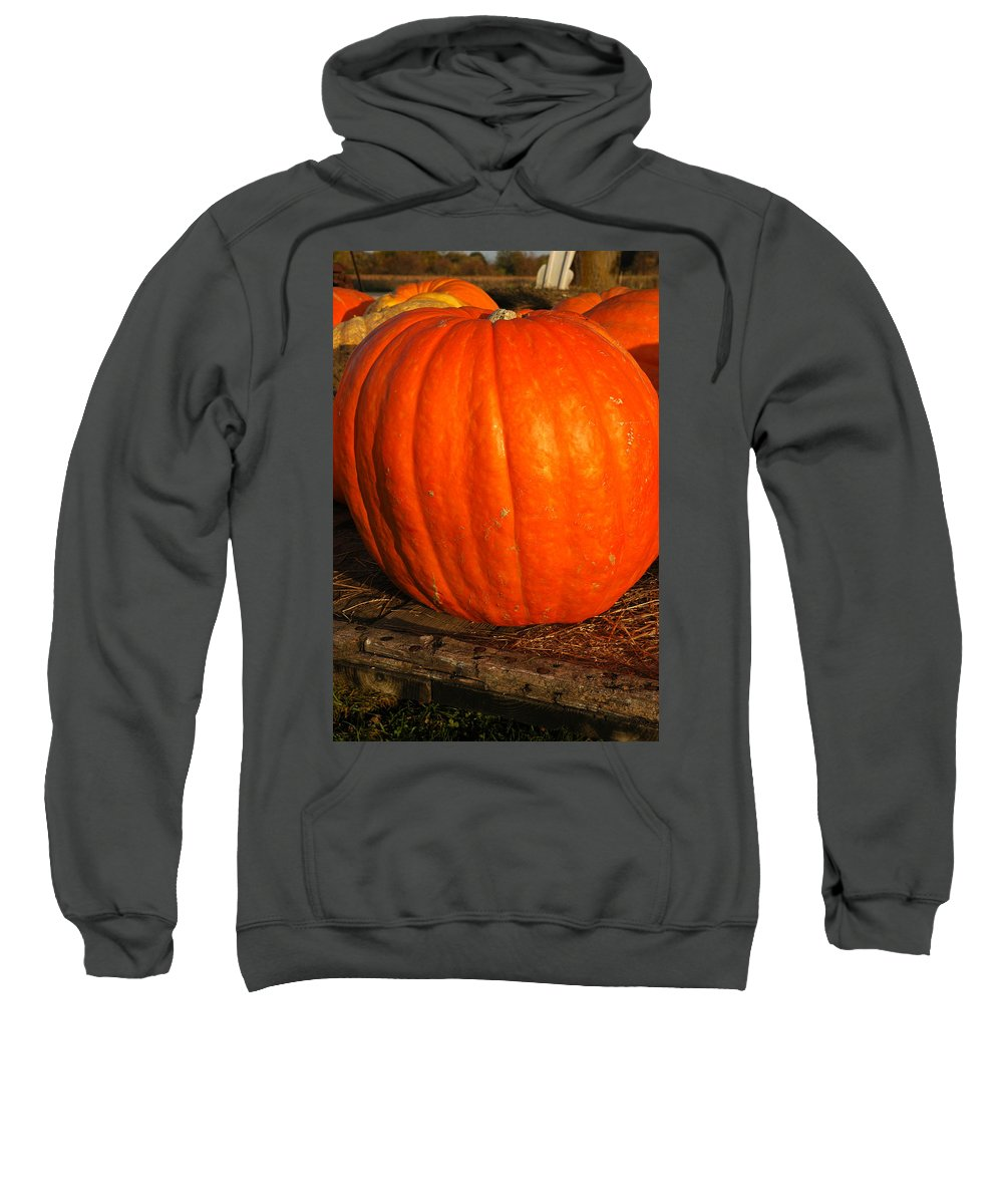 Food And Beverage Sweatshirt featuring the photograph Largest Pumpkin by LeeAnn McLaneGoetz McLaneGoetzStudioLLCcom