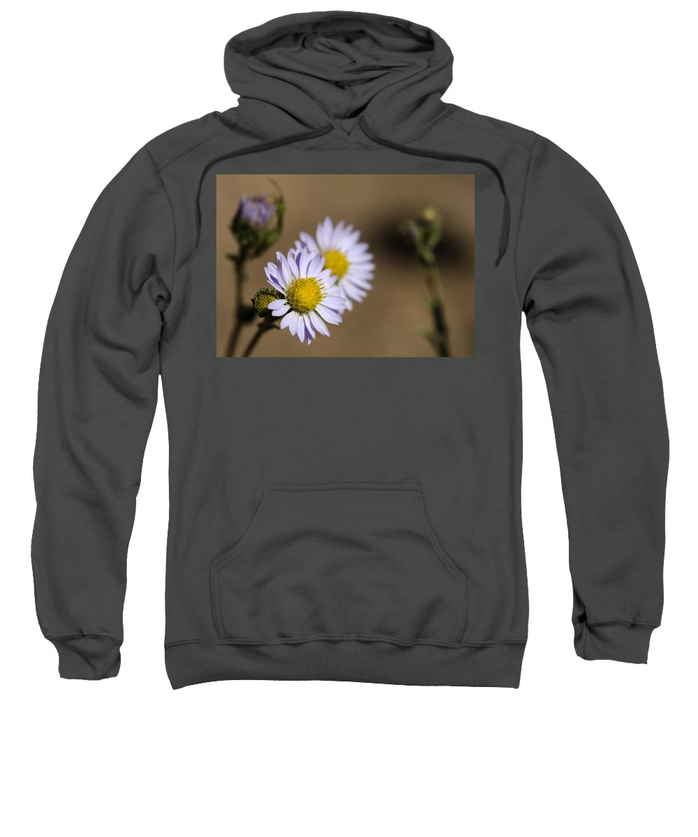Wildflower Sweatshirt featuring the photograph Purple Aster by Dianne Phelps
