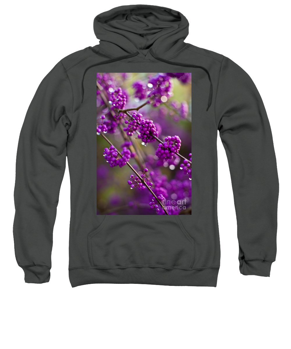 Olympus Zuiko Sweatshirt featuring the photograph Purple Drops by Mike Reid