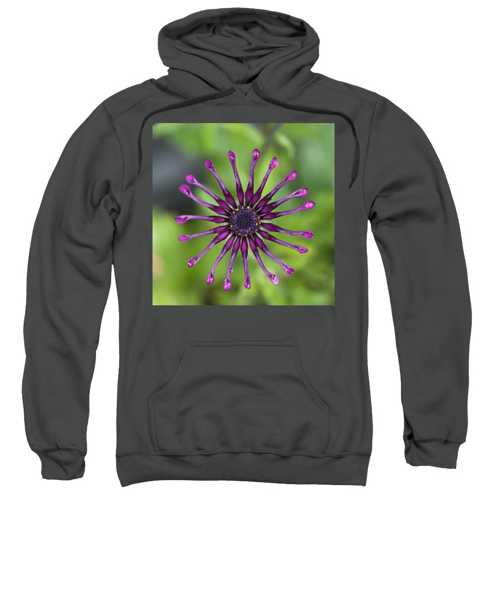 Bloom Sweatshirt featuring the photograph Purple Flower In Bloom by Keith Levit