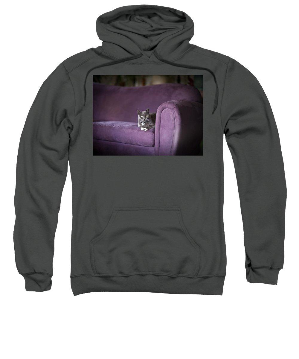 Cat Sweatshirt featuring the photograph Purple Resplendent by Mike Reid
