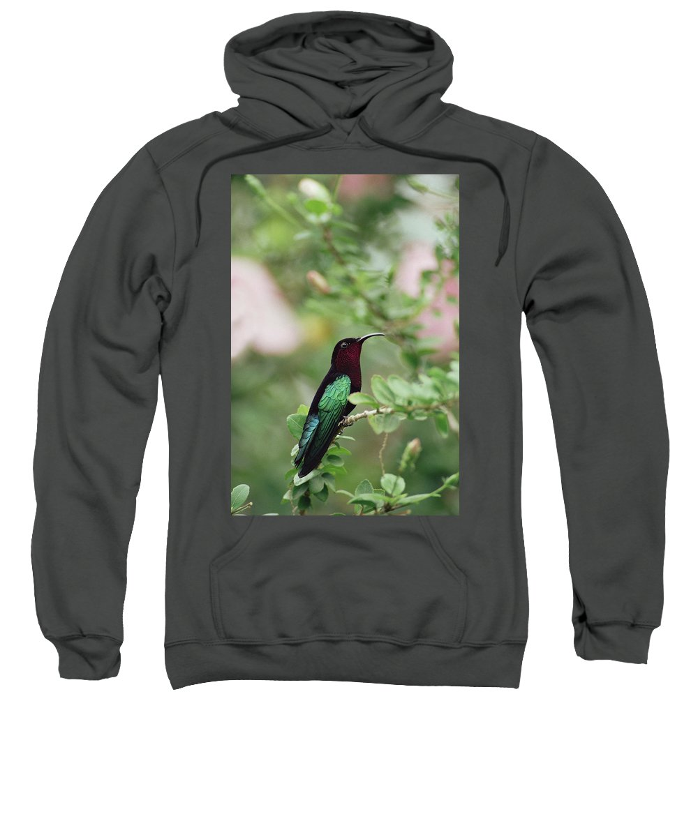 Mp Sweatshirt featuring the photograph Purple-throated Carib Eulampis by Gerry Ellis