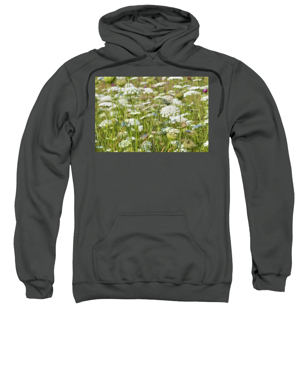 Daucus Carota Sweatshirt featuring the photograph Queen Anne's Lace In All Its Glory by Kathy Clark