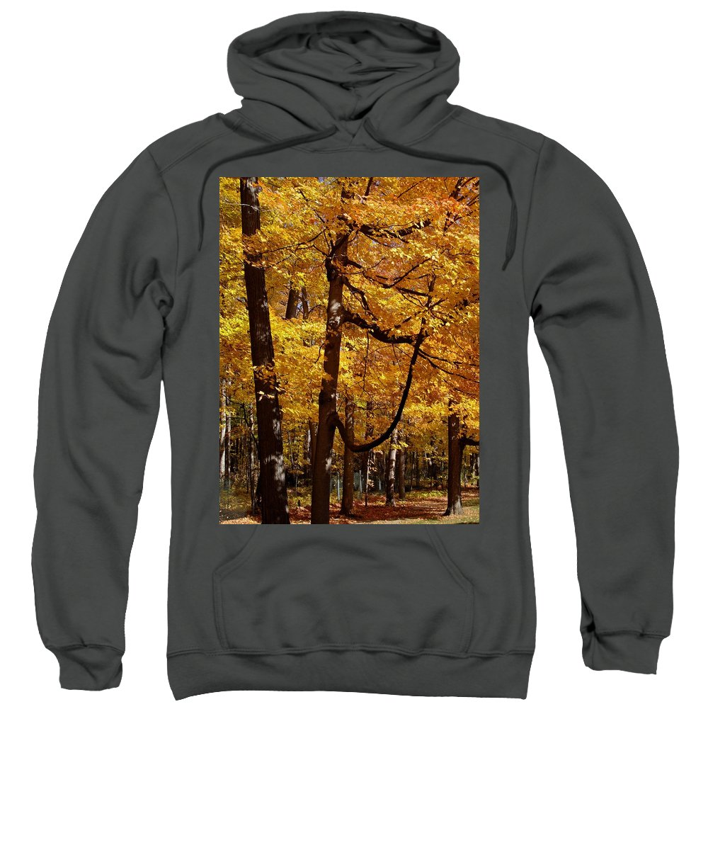 Fall Sweatshirt featuring the photograph Quiet Walk by Joseph Yarbrough