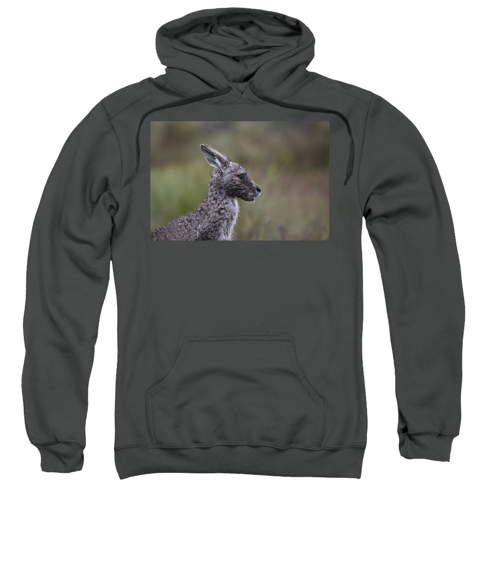Wallaby Sweatshirt featuring the photograph Rainswept by Douglas Barnard