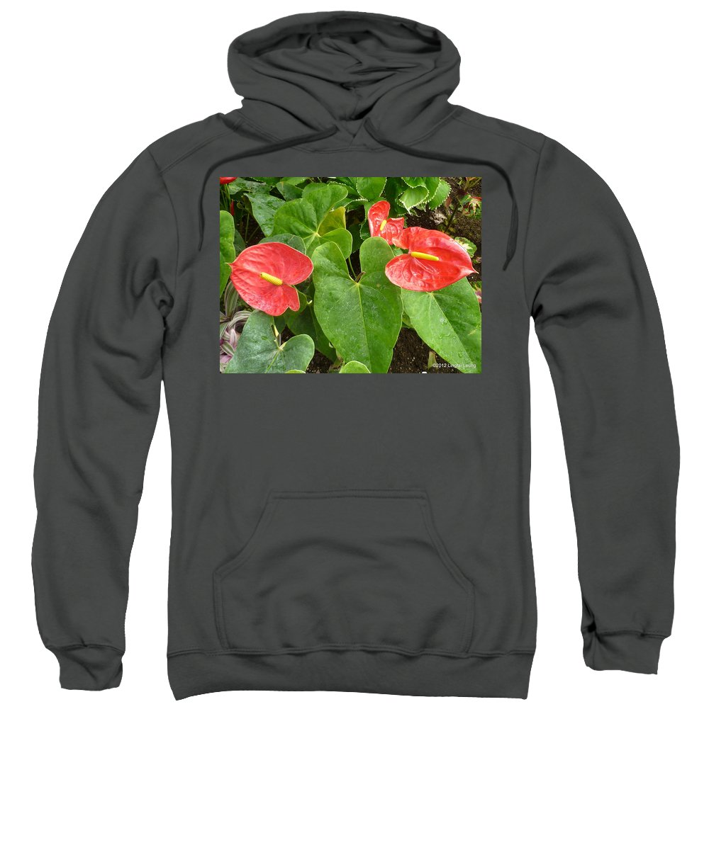 Flower Macro Sweatshirt featuring the photograph Red Anthurium by Lingfai Leung