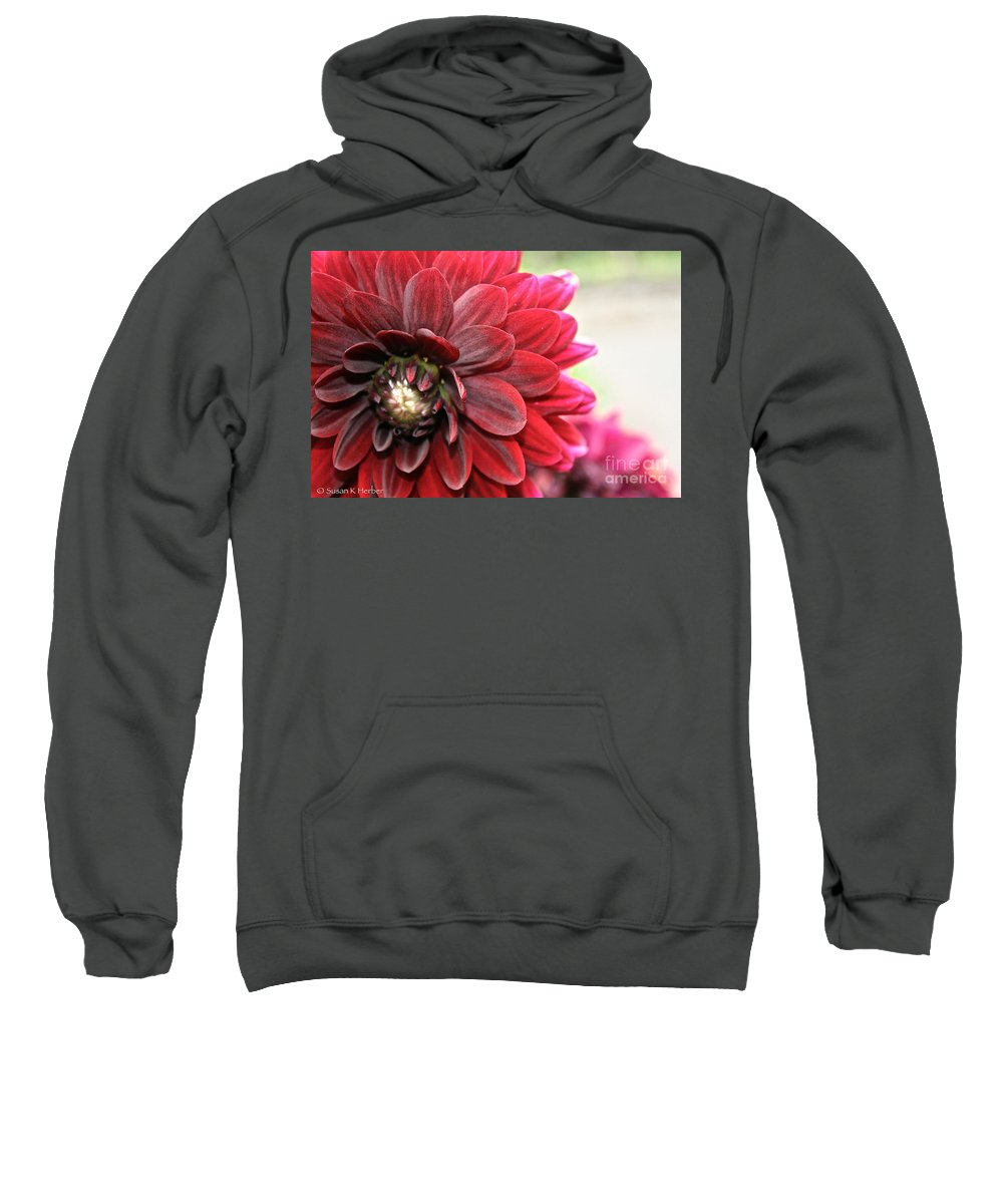 Plant Sweatshirt featuring the photograph Red Carpet Dahlia by Susan Herber