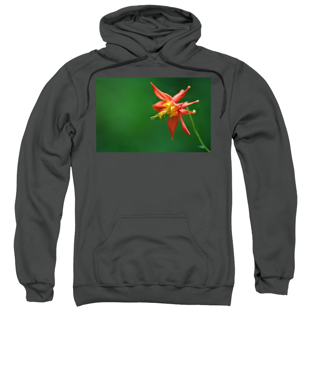 Light Sweatshirt featuring the photograph Red Columbine Aquilegia Formosa by Robert Postma