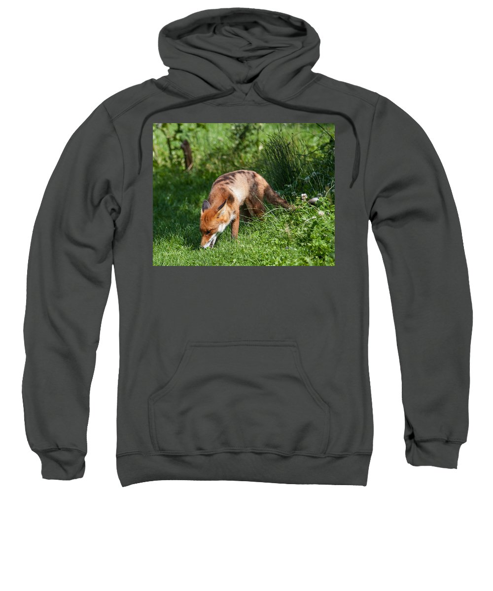 British Wildlife Centre Sweatshirt featuring the photograph Red Fox by Dawn OConnor
