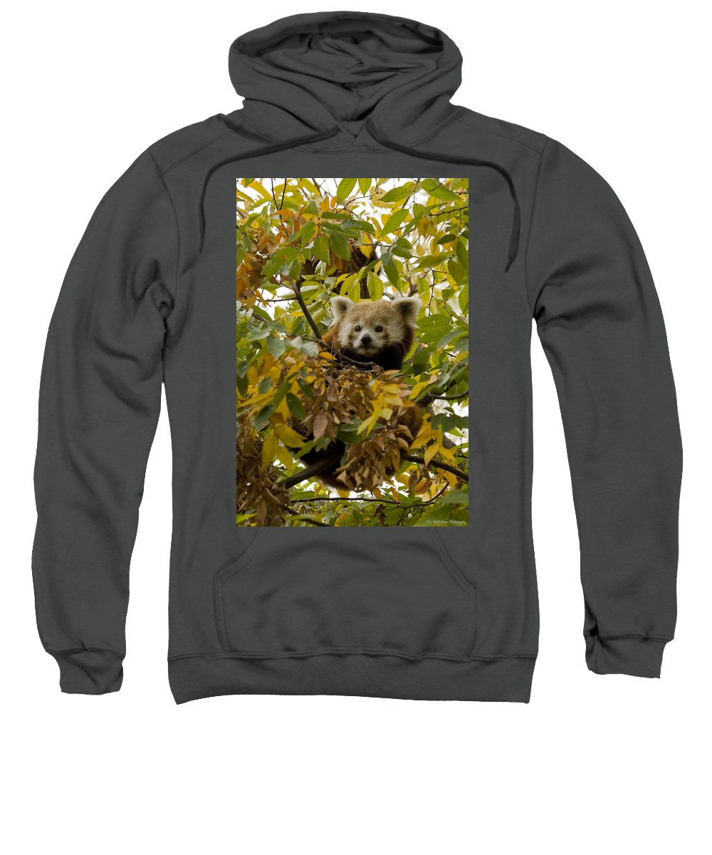 Red Panda Sweatshirt featuring the photograph Red Panda by Crystal Heitzman Renskers