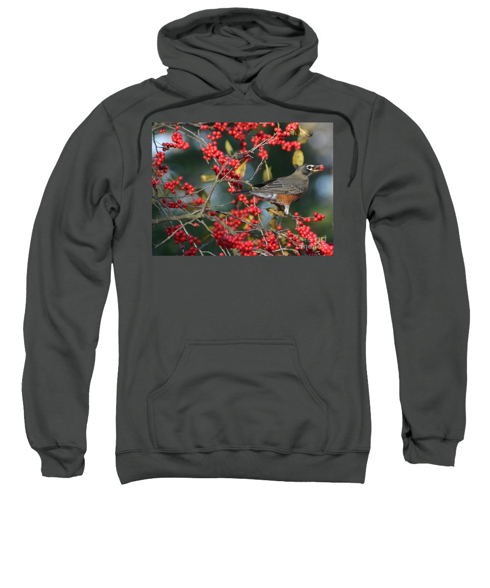 Birds Sweatshirt featuring the photograph Red Robin by Living Color Photography Lorraine Lynch