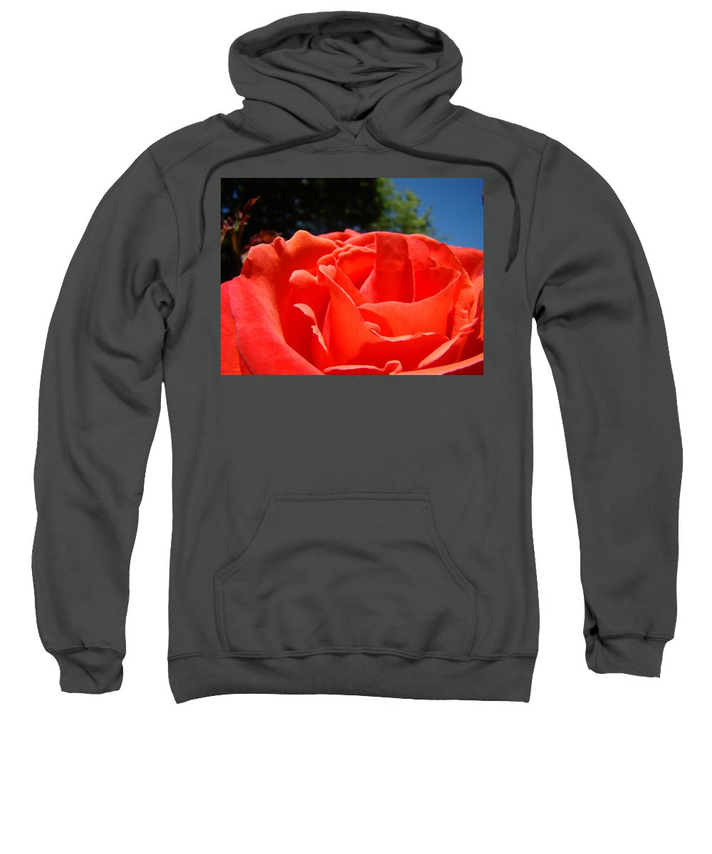 Rose Sweatshirt featuring the photograph Red Rose Flower Bright Colorful Vivid Red Floral Rose by Baslee Troutman