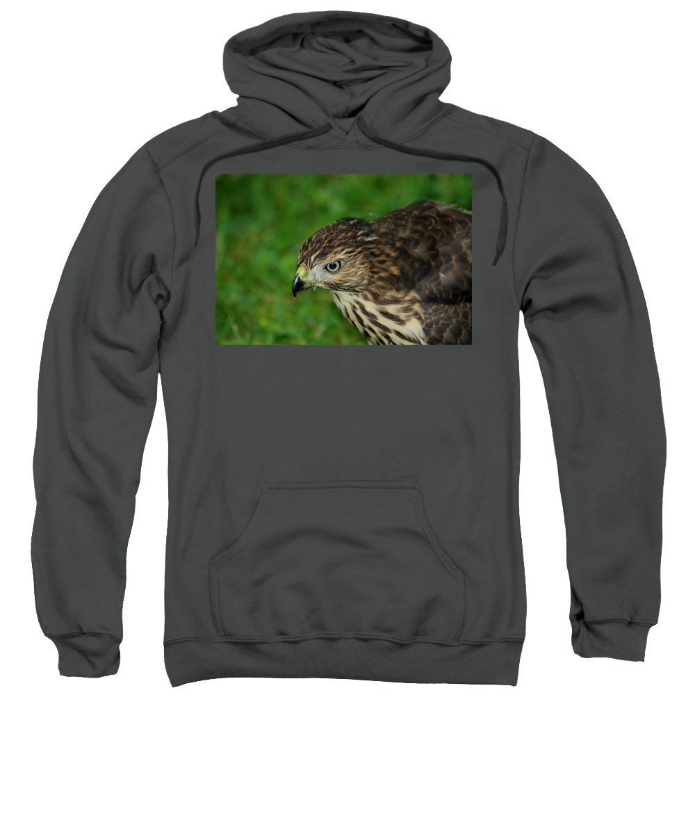 Red Sweatshirt featuring the photograph Red Tail Hawk by Dennis Pintoski