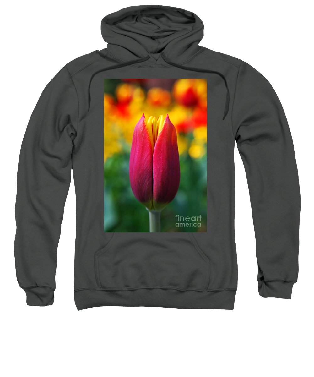 Yhun Suarez Sweatshirt featuring the photograph Red Tulip by Yhun Suarez