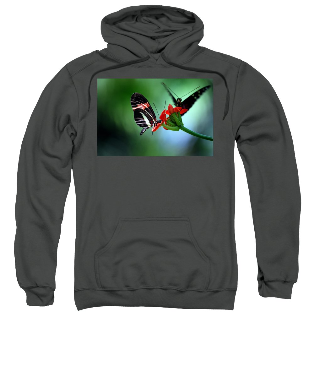 Butterflies Sweatshirt featuring the photograph Reservations For Two by Skip Willits