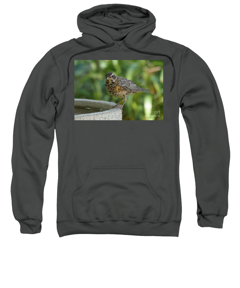 Robin Sweatshirt featuring the photograph Robin Contemplating Getting In by Lori Tordsen