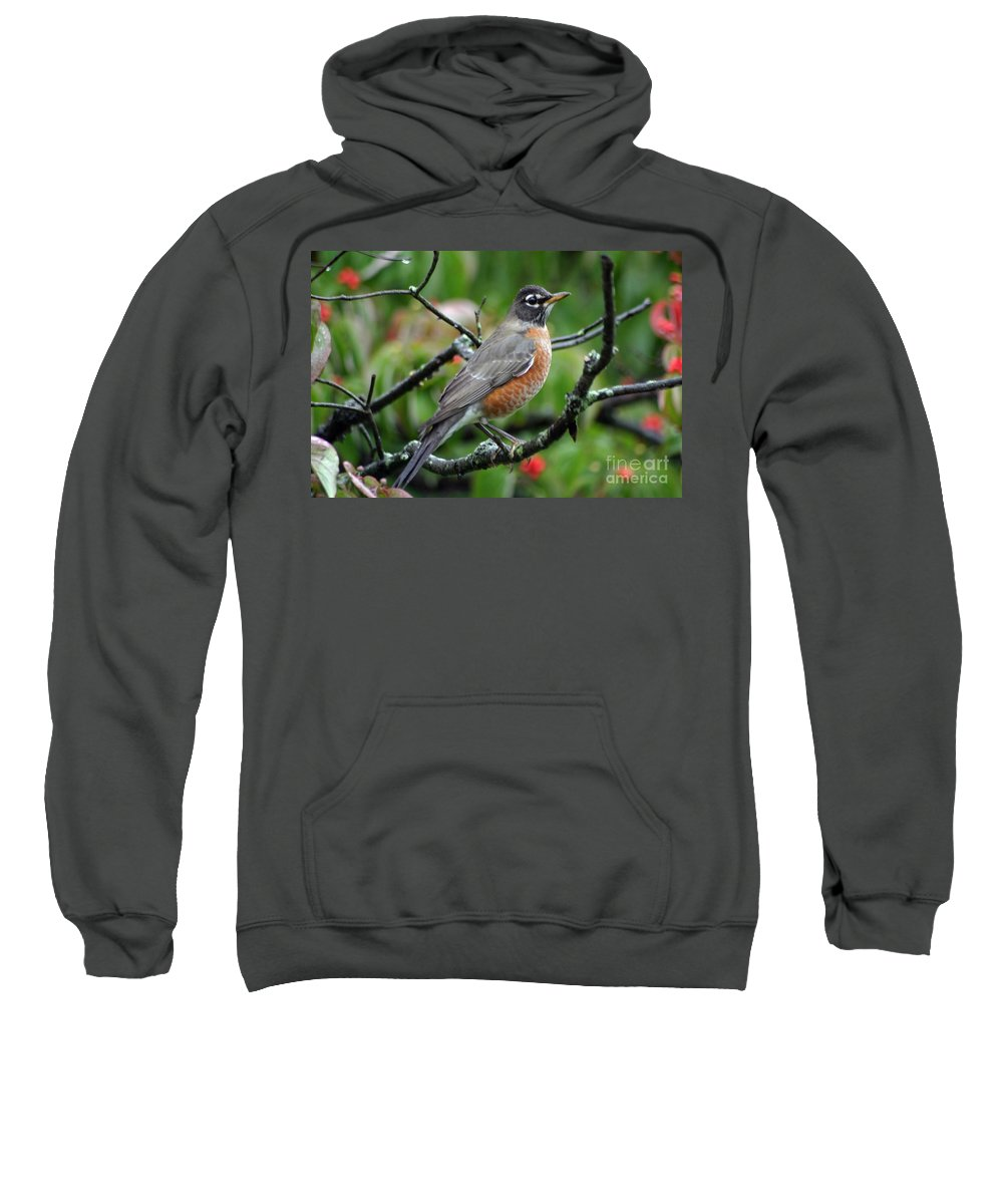 Birds Sweatshirt featuring the photograph Robin by Living Color Photography Lorraine Lynch