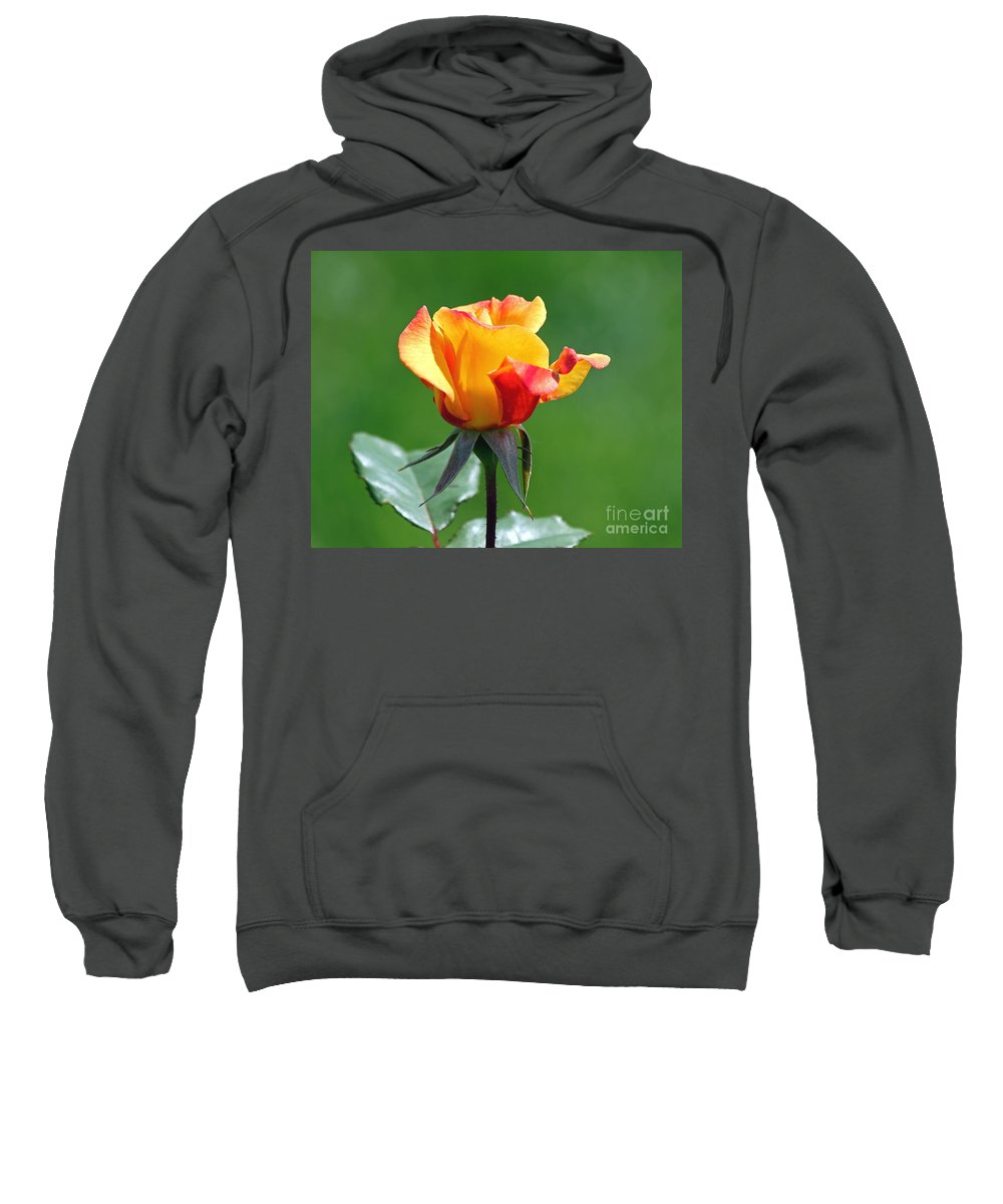 Red Rose Sweatshirt featuring the photograph Rosebud by Jack Schultz