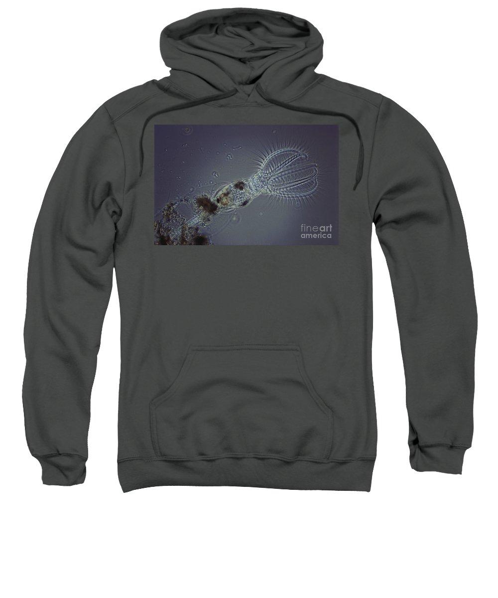 Stephanoceras Sweatshirt featuring the photograph Rotifer Stephanoceras by M. I. Walker