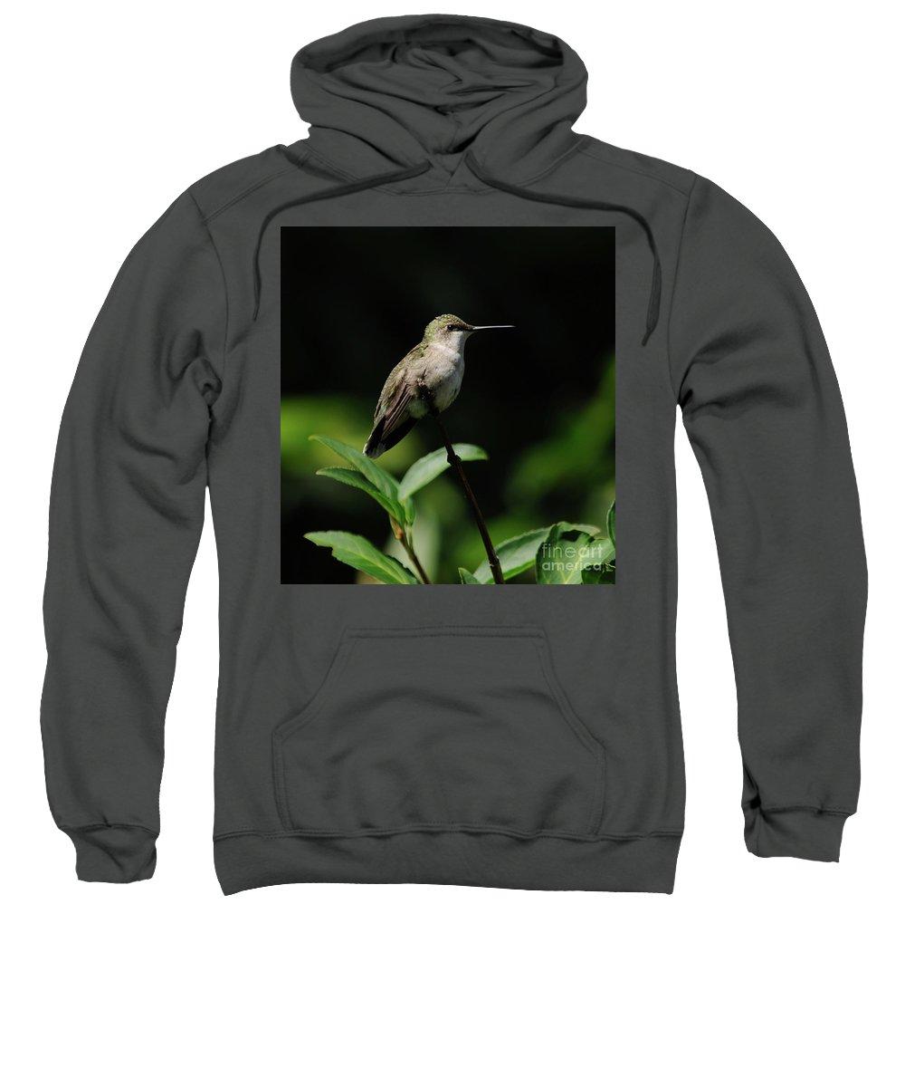 Green Sweatshirt featuring the photograph Ruby-throated Hummingbird Female by Ronald Grogan