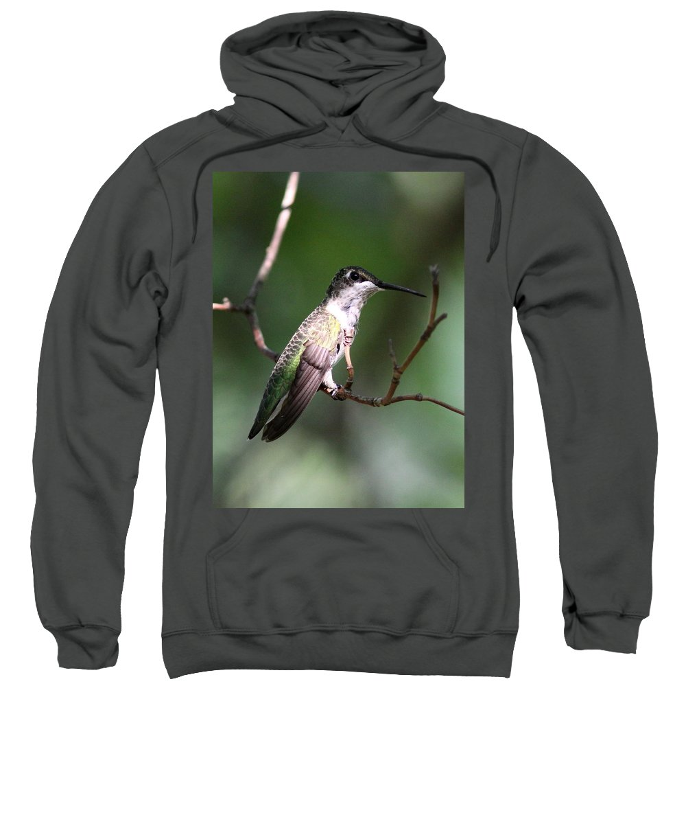 Hummingbird Sweatshirt featuring the photograph Ruby-throated Hummingbird - Hanging Low by Travis Truelove