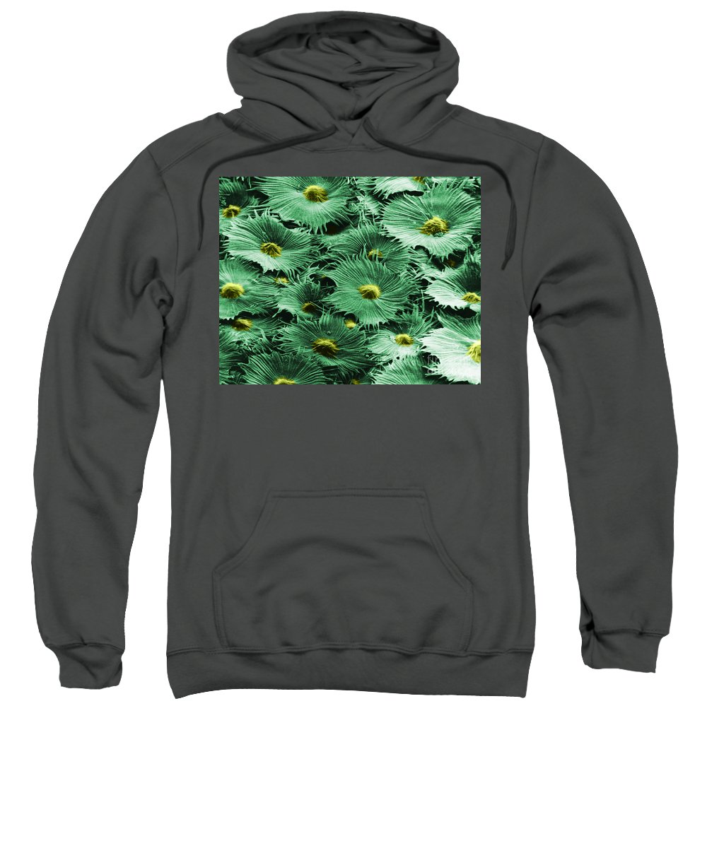 Science Sweatshirt featuring the photograph Russian Silverberry Leaf by Asa Thoresen and Photo Researchers