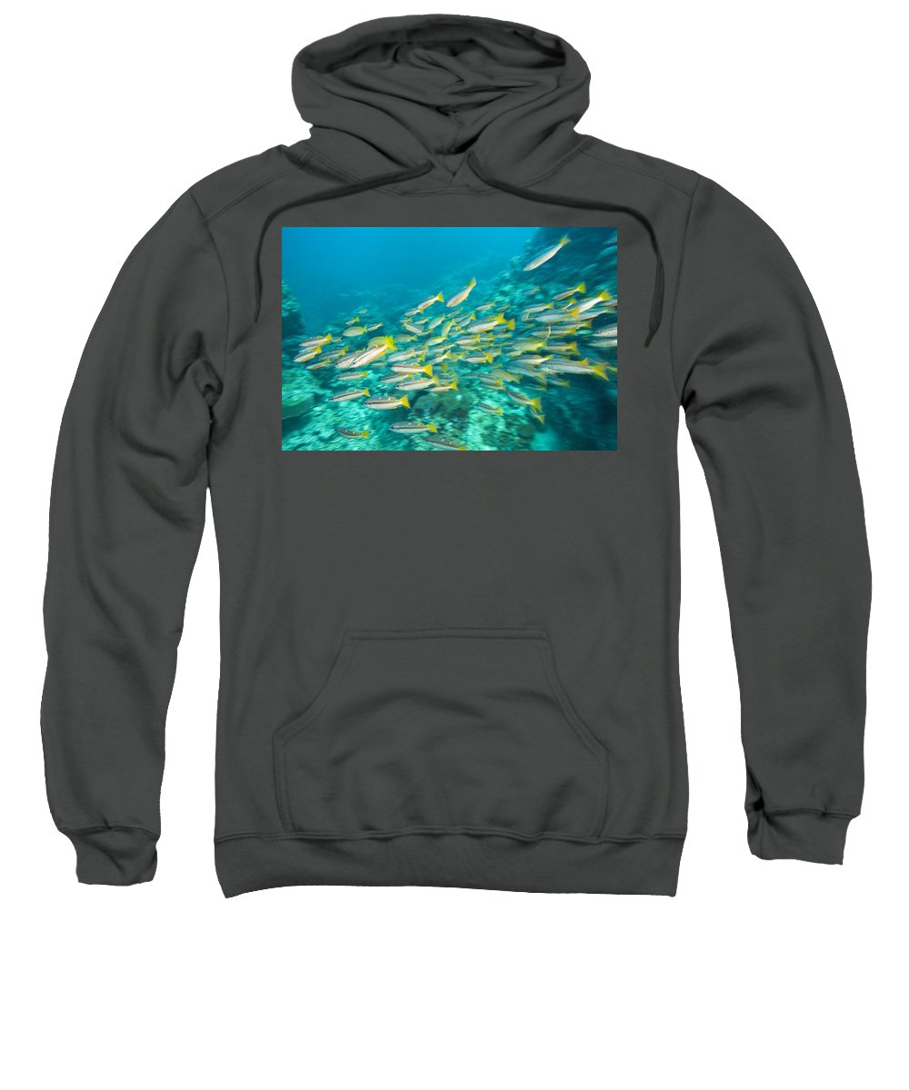 Andaman Sea Sweatshirt featuring the photograph Schooling Bigeye Snappers by Stuart Westmorland