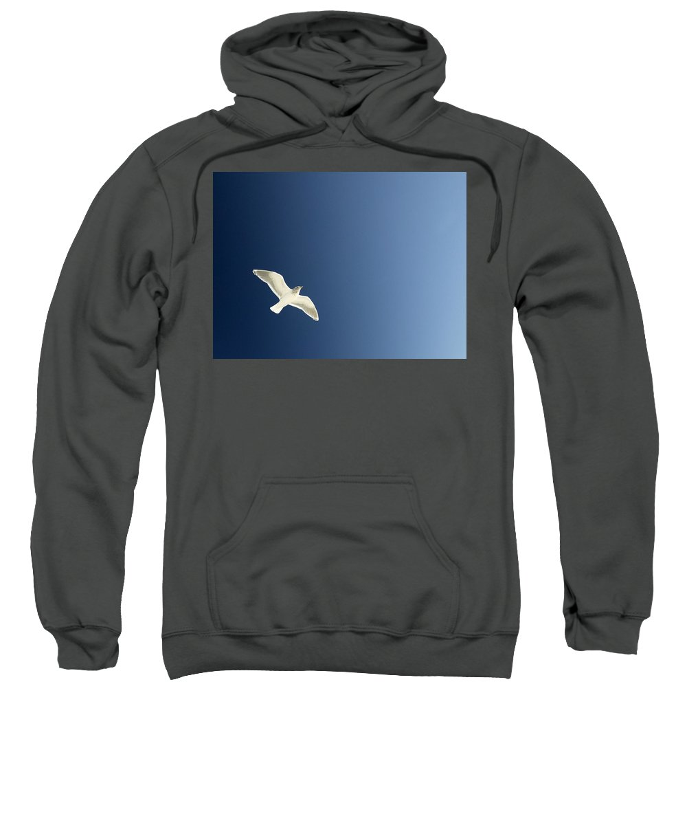 Bird Sweatshirt featuring the photograph Seagull Soaring by Con Tanasiuk