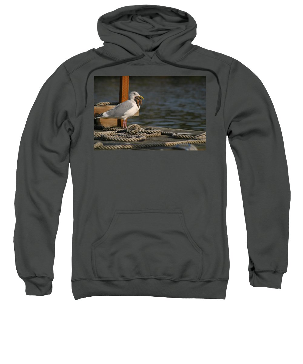 Seagull On Dock With Rope Sweatshirt featuring the photograph Seagull Swallows Starfish by Kym Backland